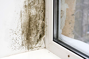 Can a Moisture Meter Detect Mold?